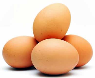 Falsafah Telur